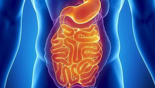 Morbus Crohn: Differenzialdiagnostik mit fäkalen Markern